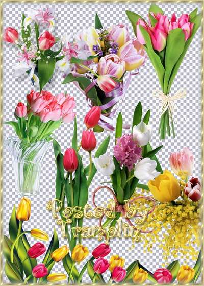 Multi-colored tulips png download - free 45 png images tulips
