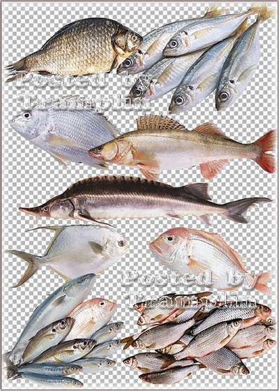 Clipart Fish free png images download