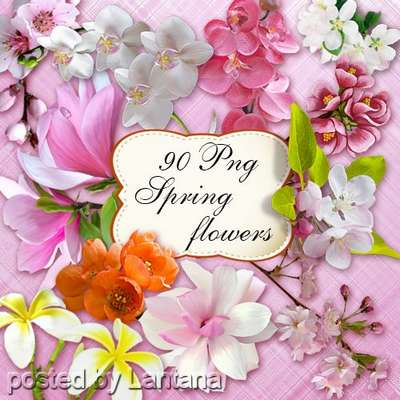 Spring flowers on a transparent background - free 90 png images