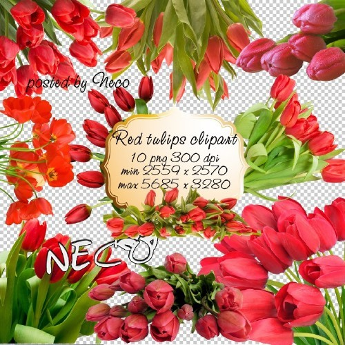 Red Tulips PNG download - free 10 png images