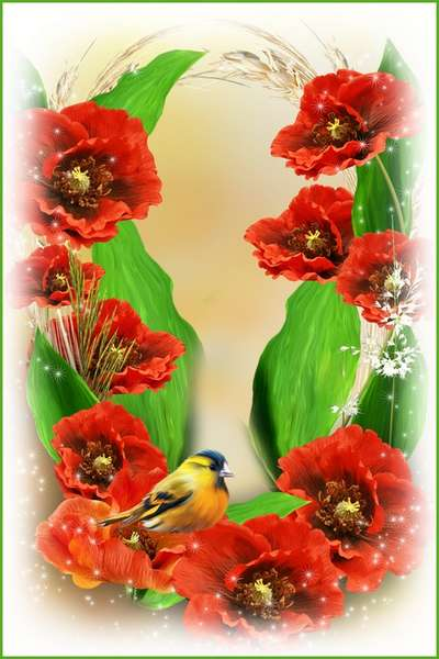 Flower frame for women photos - Beautiful poppies