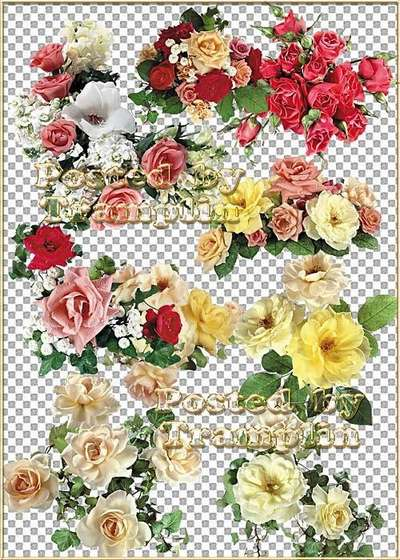 Roses - About beautiful roses without thorns Long ago to speak in verse and prose