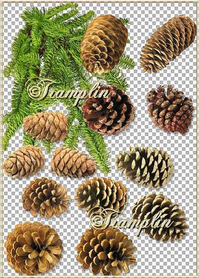 Clipart in Png - Fir tree big shot