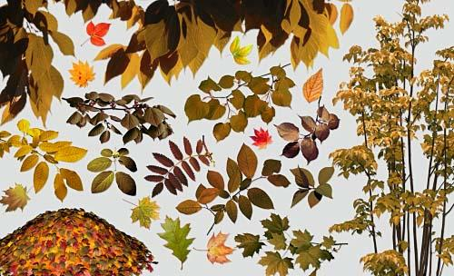 Clipart for Photoshop - Autumn leaf fall