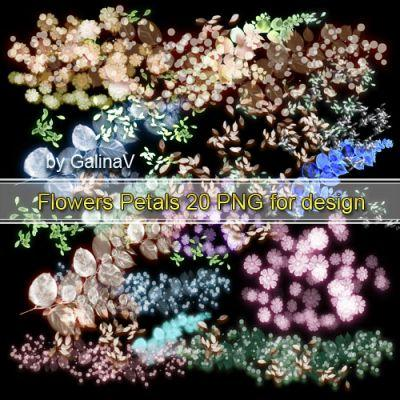 Flowers Petals for design transparent PNG (2)