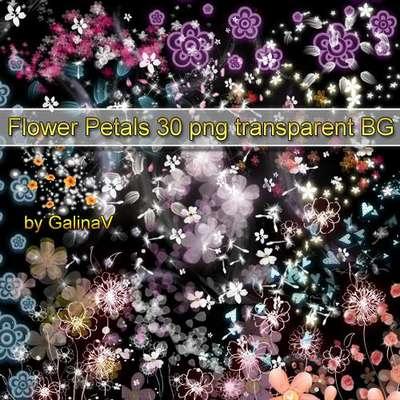 Flowers Petals transparent PNG