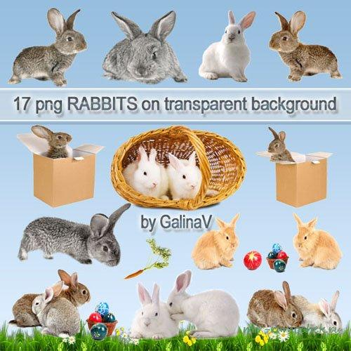 Rabbits PNG images download