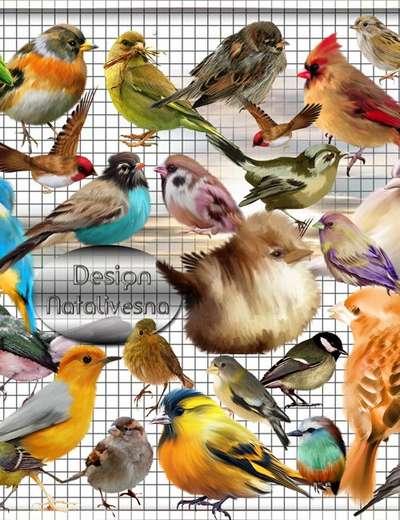 Clipart- Multi-colored birdies