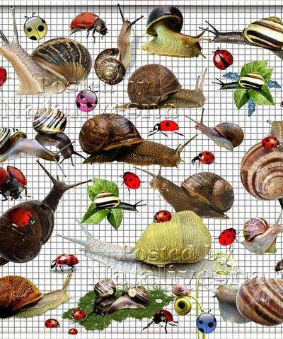 Selection on a transparent background – Snails and solar Ladybirds