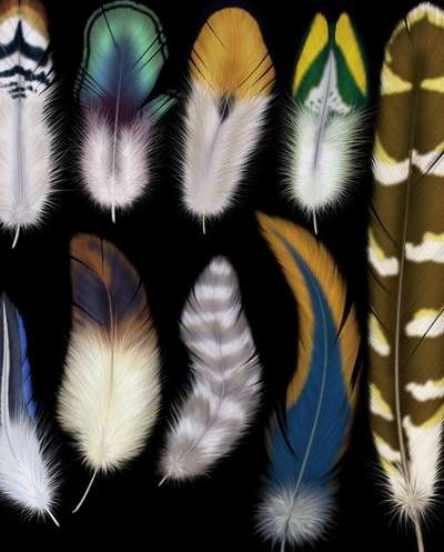 Exotic feathers - PNG