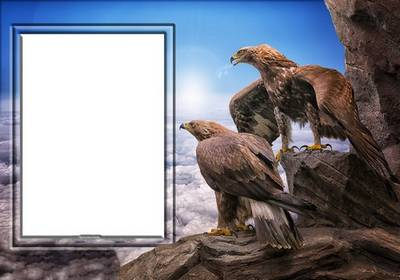 Free psd photo frame for women photos - two eagles on a rock