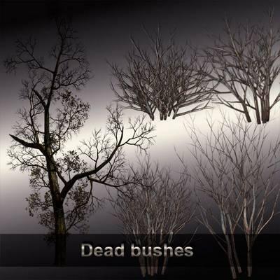 Dead bushes