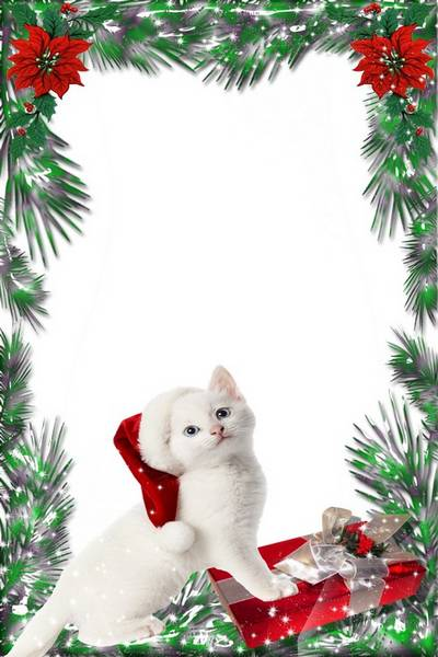 Christmas frame with white Cat. Transparent PNG Frame, PSD Layered ...