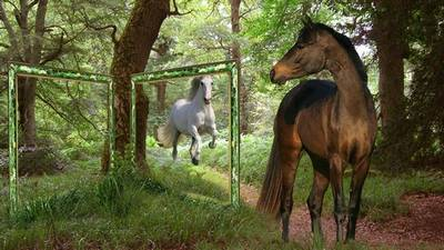 The frame for a photo - the Horse admires your photos