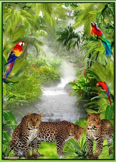 Frame for photoshop - Wonderful leopards