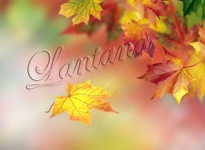 PSD Templates - Autumn scatters gold again by the will of heaven