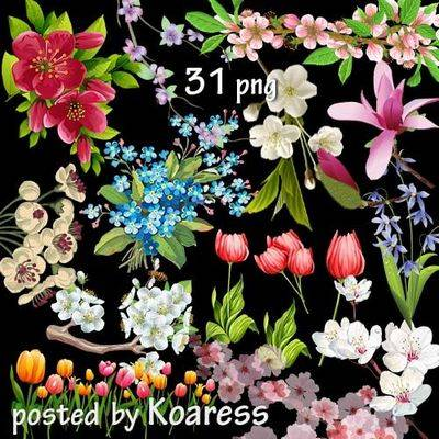 Clipart Png images for design spring flowers on a transparent background