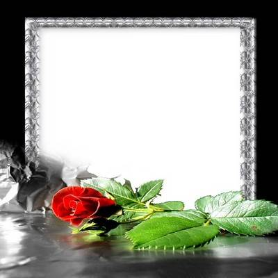 Stylish psd frame for photo - Red rose