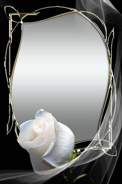 Stylish psd frame for photo - White rose