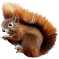 Squirrels png - cracking nuts, it sings a song, squirrels png on a transparent background