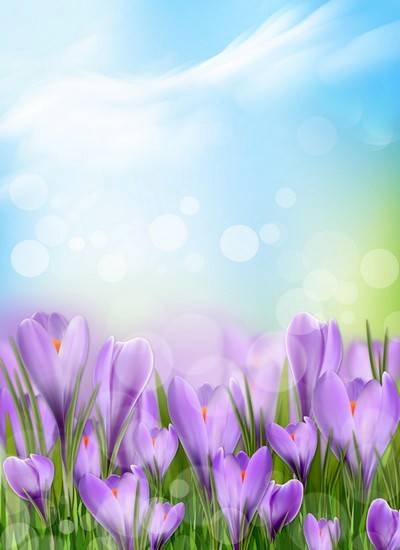 Spring background PSD format with flowers of saffron - multilayer PSD for Photoshop
