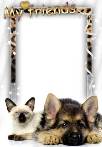 Photoshop frame psd png with pets - cat and dog. Transparent PNG ...