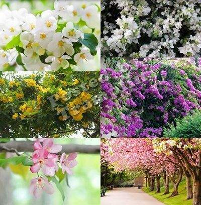 Spring background Jpg format - Flowering trees 55 Jpg, 5543 x 4543 px