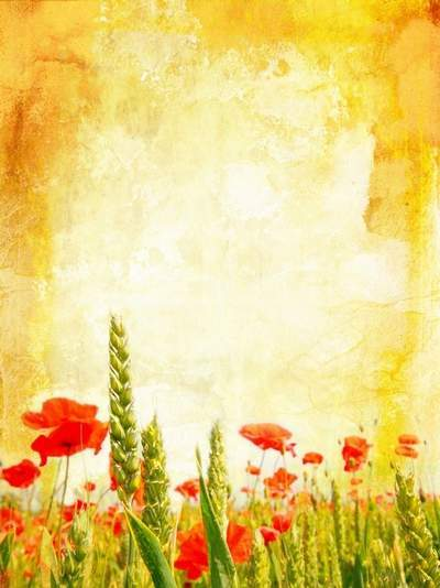 Wildflowers - vintage backgrounds