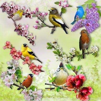 Clipart PNG Spring Birds - 9 PNG,  4000х4000 px