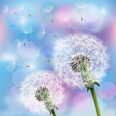 2 Multilayer PSD backgrounds for design in Photoshop - Dandelions