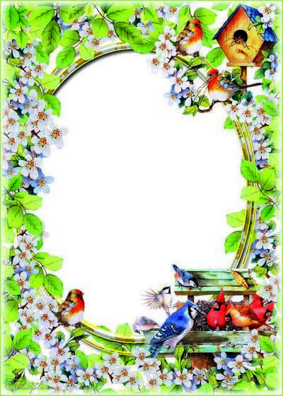 Frame with birds - feathers ruffled, tail fluffed up