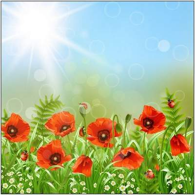 Multi-layered PSD background - Flowers poppies