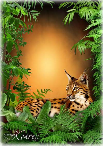 Layered photo frames with tiger and lynx for female portraits, for Photoshop