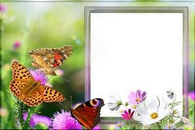 Рамка для фото - Бабочки