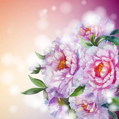 Free psd backgrounds - 2 layered psd file beautiful flower peonies