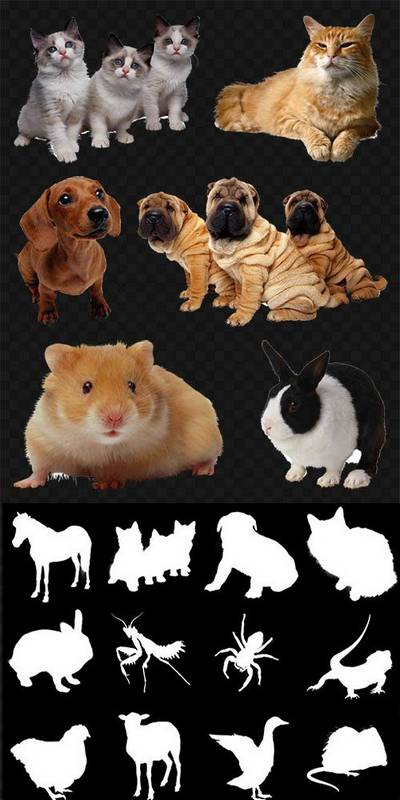Animals Clipart PNG images - 119 PNG Animal + 50 ALPHA, transparent background,  ~ 3156x3156 px, File Size 605,19 MB