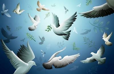 Pigeons PSD