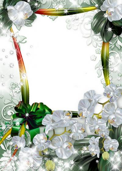 2 frames for Photoshop - a Dandelions and Orchids