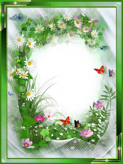 Photoshop Frame for photo - daisies and butterflies