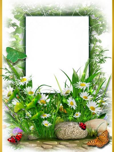 Frame for photoshop - Field-flower, pretty daisies