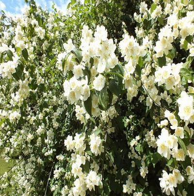 Spring background Jpg format - Flowering trees 55 Jpg, 5543 x 4543 px