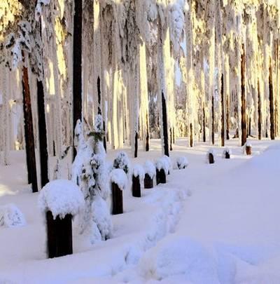 Winter backgrounds Jpg  – In white forest 55 Jpg, 5612x3724 px