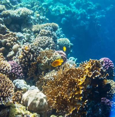 Underwater World (15 UHQ JPEG) - Backgrounds for photoshop