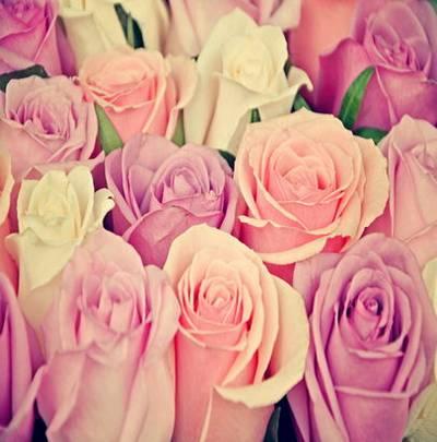 UHQ JPG Backgounds - Beautiful Roses