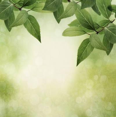 Fresh green spring backgrounds