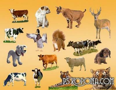 Animals Clipart PSD free download