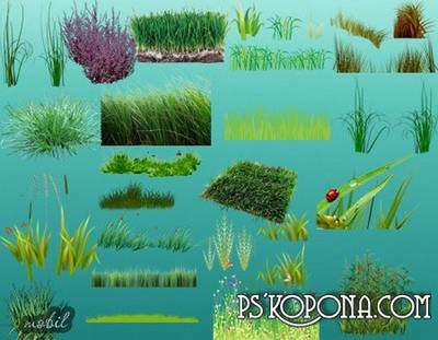 Clipart PNG Grass download