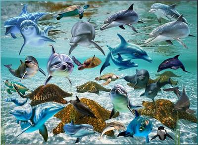 Free PSD file - Dolphins, multi-layered psd, each element on separate layer