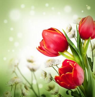 Baskets of tulips - set of spring backgrounds