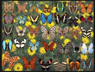 Clipart png images Butterfly - 53 png butterflies on a transparent background, 3500х2400 px